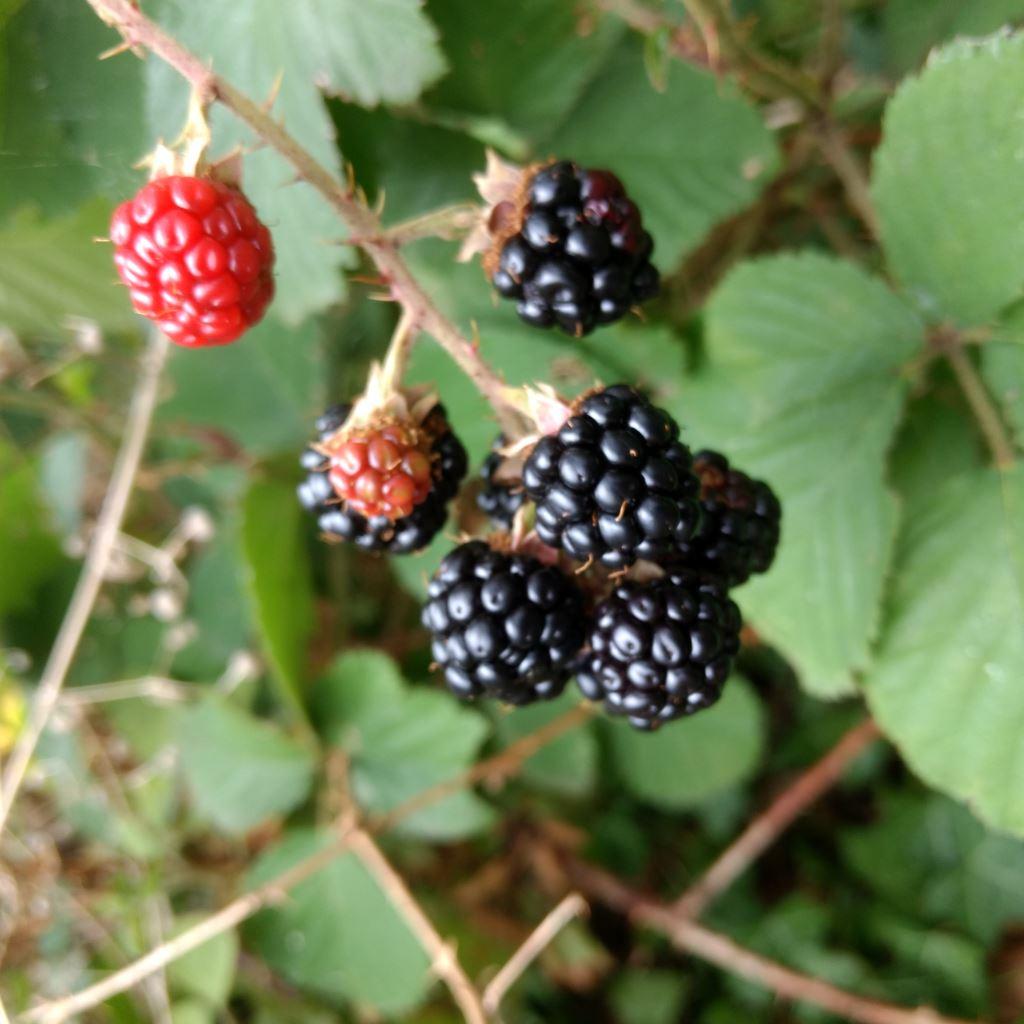 Früchte erkennen